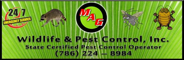 MAG Wildlife & Pest Control is a home grown, family business with over 40 years accumulated experience within the pest control industry.